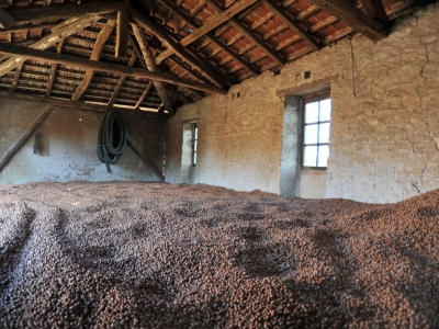 essiccazione naturale al sole nocciole no aflatossine piemonte igp semilavorati natural drying by sun no aflatoxine piedmont pgi
